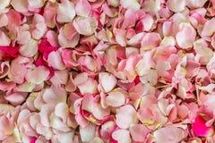 Роза пинка цветет предпосылка, текстура или картина Стоковые Фото