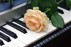 роза рояля одиночная Стоковые Фотографии RF