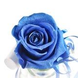 Роза сини изолированная на белизне стоковые изображения rf