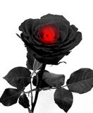 Роза черноты с сердцем стоковые изображения rf