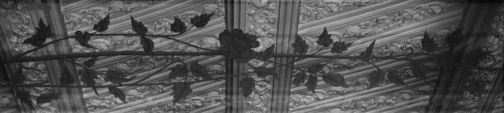 Роза Beautifule покрашенная на стекле стоковое изображение