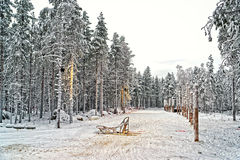 Розвальни на долине снега в финской Лапландии в зиме Стоковое Изображение
