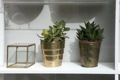 Розетка Echeveria суккулентная в керамической кружке с запачканным ярким copyspace предпосылки желтого зеленого цвета, подносом с Стоковая Фотография