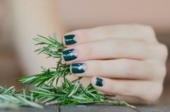 Розмари в женской руке с красивое темное ым-зелен Стоковая Фотография