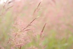 Розоватое, purplish и ish ish природы стоковые фотографии rf