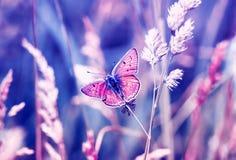 Розовая бабочка, мед-бабочка сидит на солнечном луге лета в пастельных цветах и теплом свете стоковая фотография