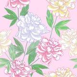 Розовая безшовная картина с пионами Стоковые Изображения RF
