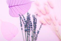Розовая ботаническая абстракция Сухой цвет пинка выходит на розовый b Стоковые Фото