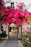 Розовая бугинвилия   стоковое изображение rf