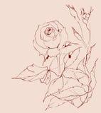 Розовая ветвь конструкция предпосылки ваша Стоковые Фотографии RF