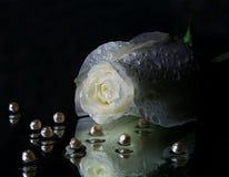 Розовая вода перлы Стоковые Фотографии RF
