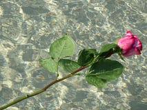 розовая розовая вода Стоковые Изображения RF
