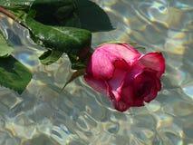 розовая розовая вода Стоковое Изображение