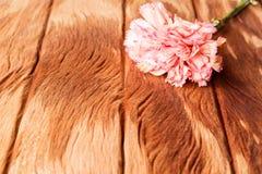 Розовая гвоздика на старой деревянной текстуре Стоковые Фото
