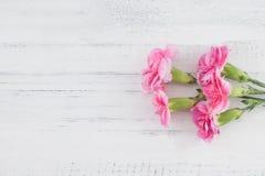 Розовая гвоздика цветет букет на белой древесине стоковое фото rf