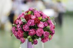 Розовая гвоздика Стоковое фото RF
