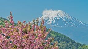 Розовая гора вишневого цвета и Фудзи Стоковая Фотография RF