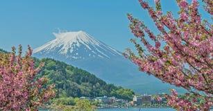 Розовая гора вишневого цвета и Фудзи Стоковое Изображение