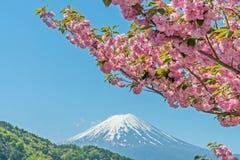 Розовая гора вишневого цвета и Фудзи Стоковое фото RF