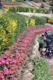 Розовая граница цветка Стоковое Изображение RF