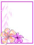 Розовая граница Plumerias Стоковое фото RF