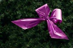 Розовая лента в ели разветвляет с малыми fairy светами для рождества Стоковая Фотография RF