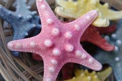 розовая звезда моря Стоковая Фотография