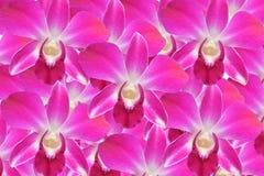 Розовая земля задней части орхидеи Стоковое Фото