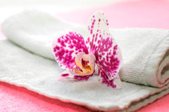 Розовая и белая орхидея Стоковые Изображения RF