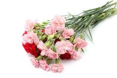 Розовая и красная гвоздика Стоковые Фото