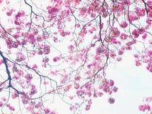 Розовая картина цветения стоковая фотография rf