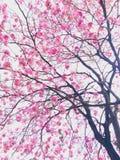 Розовая картина цветения стоковое изображение rf