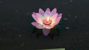 Розовая лилия воды с свечой на воде видеоматериал