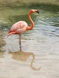 розовая милая Стоковое фото RF