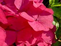 розовая милая Стоковые Изображения