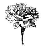 Розовая нарисованная рука doodle цветка Стоковые Фотографии RF