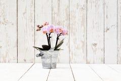 Розовая орхидея в баке металла, на белых деревянных планках Стоковое Изображение