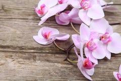 Розовая орхидея (фаленопсис) Стоковое Изображение RF