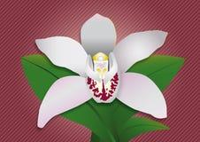 Розовая орхидея Стоковое Изображение RF