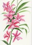 Розовая орхидея бесплатная иллюстрация