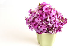 Розовая орхидея стоковое изображение