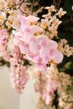 Розовая орхидея blossoming в тропическом саде Стоковая Фотография