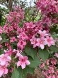 Розовая предпосылка цветков стоковое фото