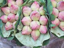 Розовая предпосылка бутона лотоса Стоковое Фото