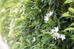 Розовая предпосылка 455 взгляда цветка Стоковые Изображения