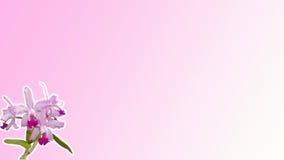 Розовая предпосылка орхидеи Стоковая Фотография RF