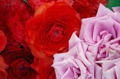 Розовая предпосылка роз и пионов Стоковая Фотография RF