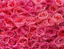 Розовая предпосылка роз Стоковое Изображение RF