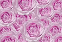 Розовая предпосылка роз Стоковое фото RF