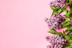 Розовая предпосылка с branche сирени Поздравительная открытка, карточка приглашения Стоковые Фото